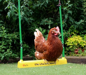 chicken swinging
