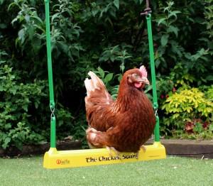 chicken swinging
