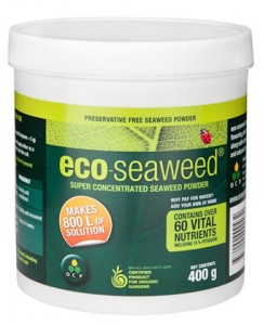 super concentrated seaweed powder